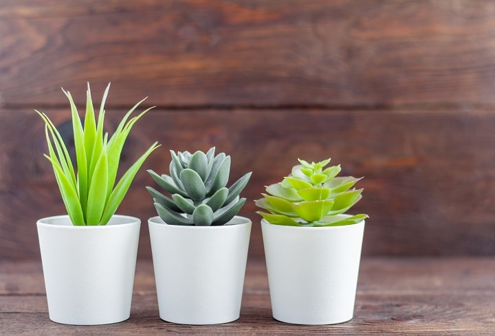 Artificial Succulents That Take Home Décor to Another Level