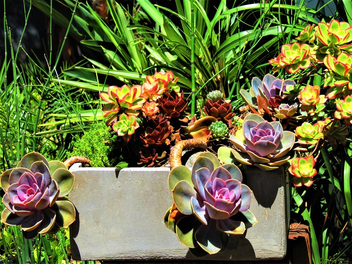 Best Flowering Succulents to Plant in Your Home or Garden