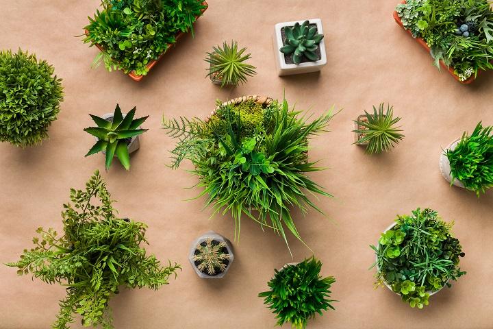 FAQ About Artificial Succulents