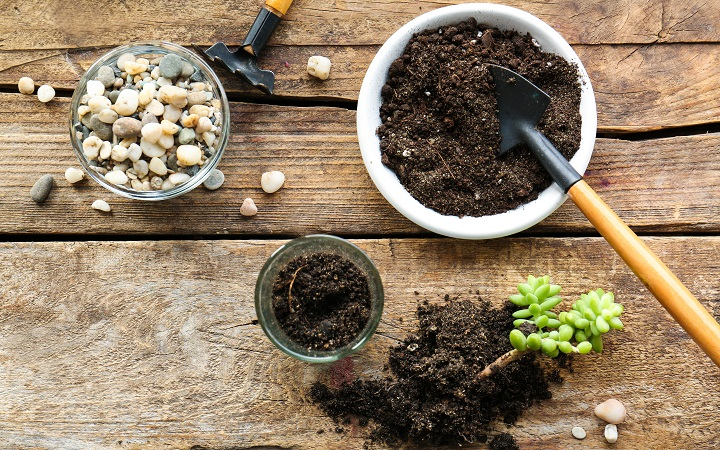 FAQ About Making Your Own Succulent Soil