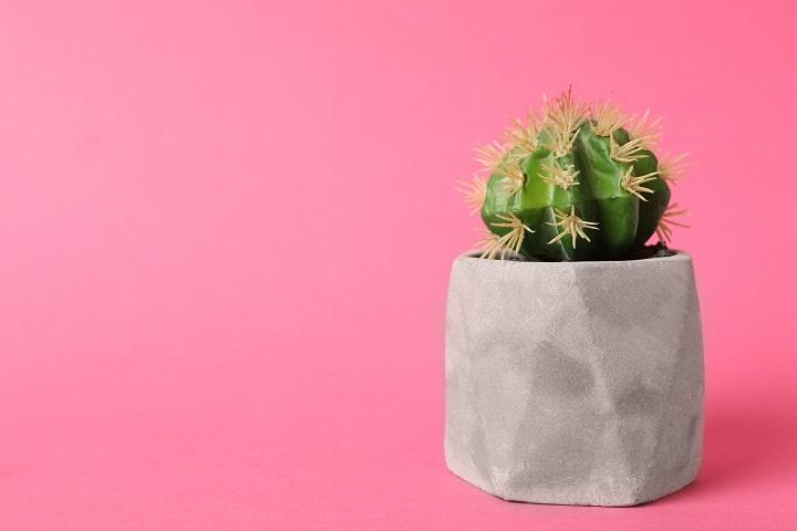 How Do Artificial Succulents Work