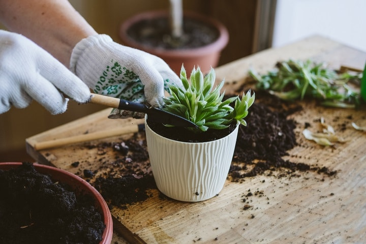 How to Grow Succulents From Seeds – All You Need to Know