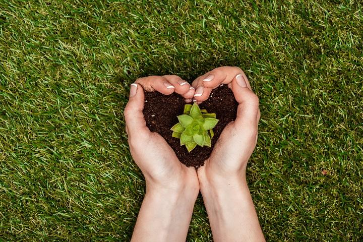 Key Succulent Soil Factors