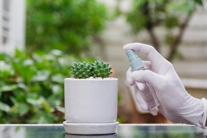 Outdoors Succulents Watering