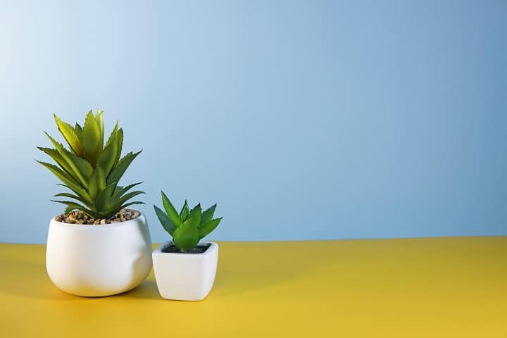 Pros and Cons of Artificial Succulents