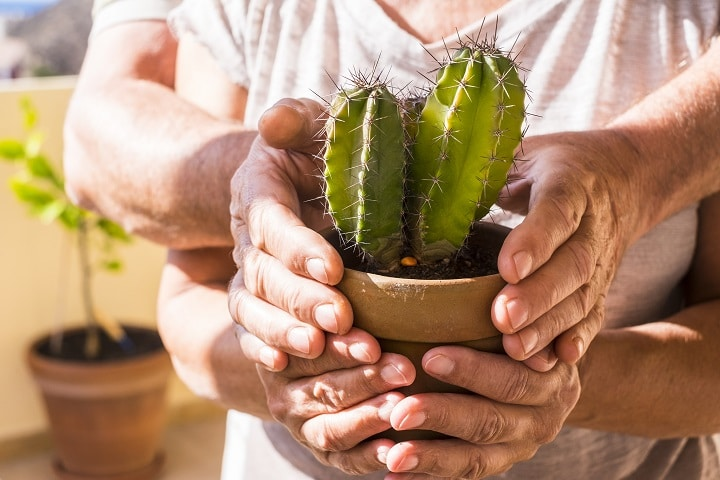 Benefits of Growing Cacti