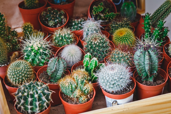 Cacti Provide a Healing Experience
