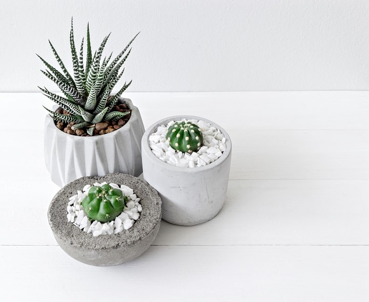 Pros and Cons of Haworthia Succulents