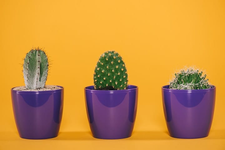 Do's and Don'ts With Cacti for Beginners