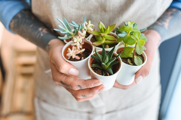 FAQ About Health Benefits of Succulents