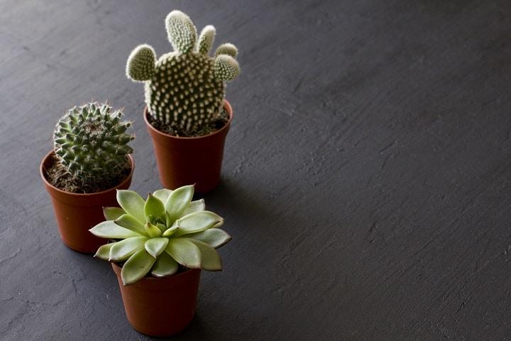 FAQ About Low Light Succulents