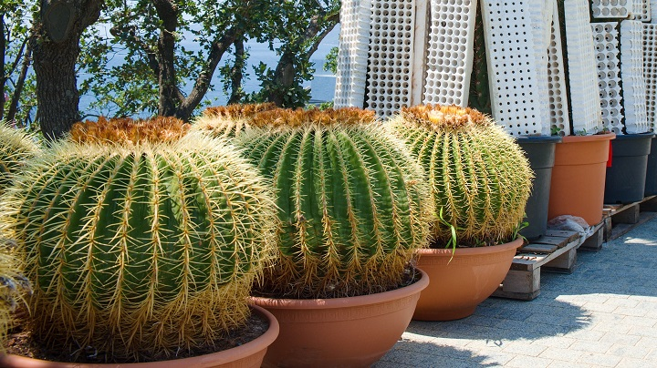 FAQ About Succulents that Grow Tall