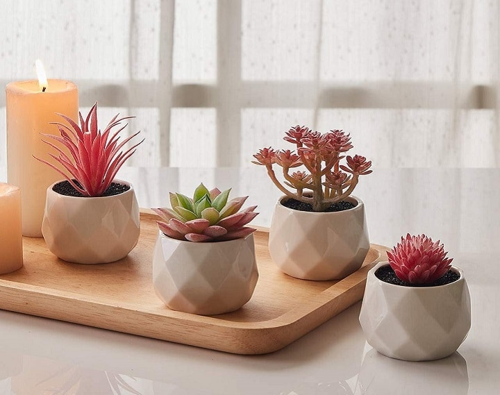 Pink Succulents Add a Breath of Fresh Air to Your Space