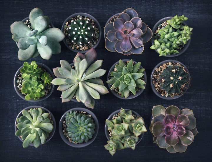 Low Light Succulents That Bloom Indoors & In Dark Areas