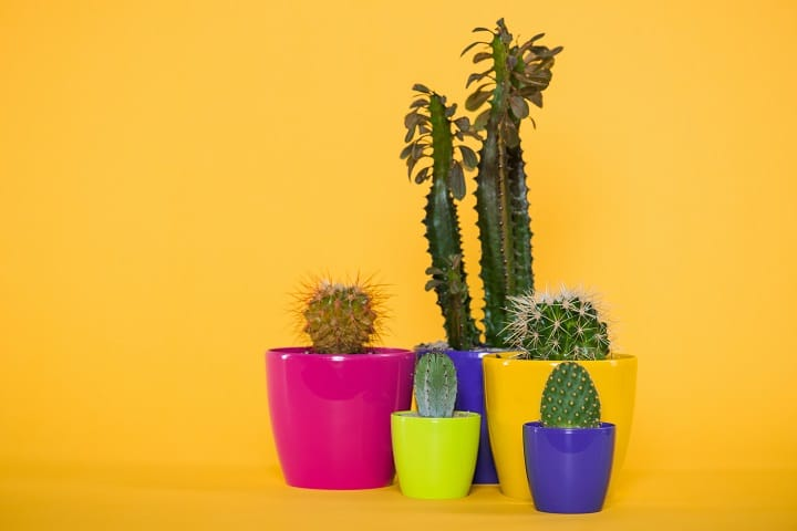Pros and Cons of Cacti
