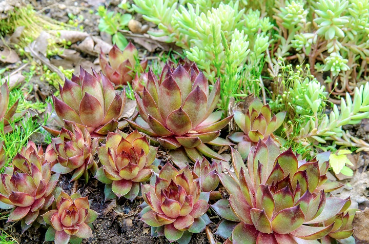 Succulent Ground Covers That'll Totally Transform Your Yard