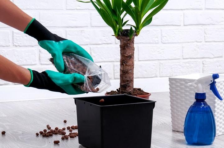 FAQ About Fertilizing Succulents