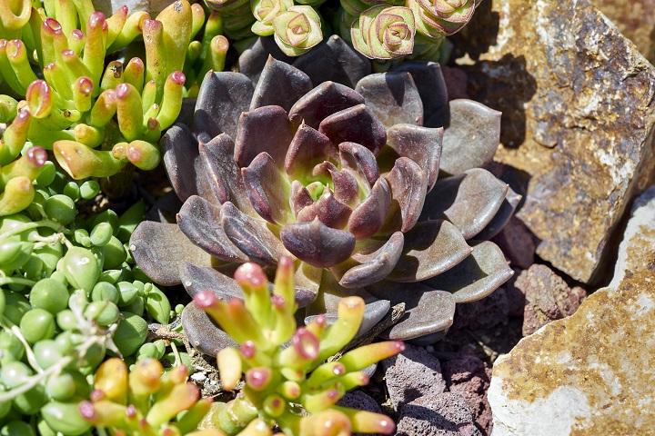 FAQ About Full Sunlight Succulents