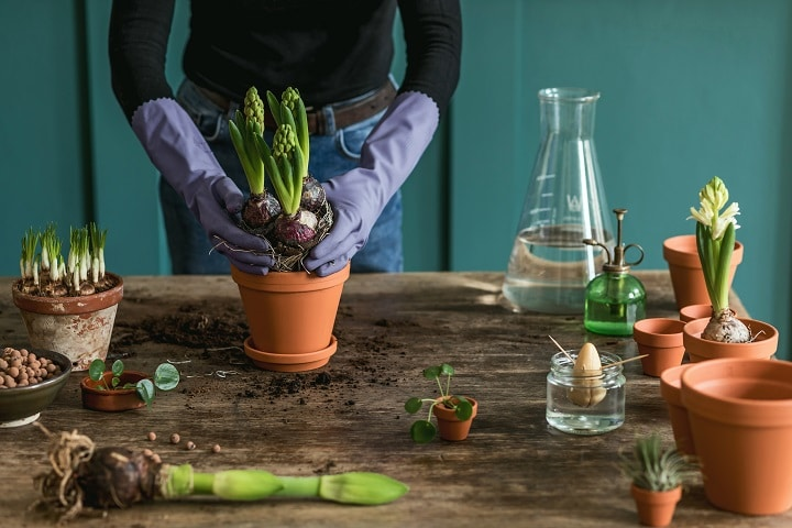 FAQ About Transplanting Succulents