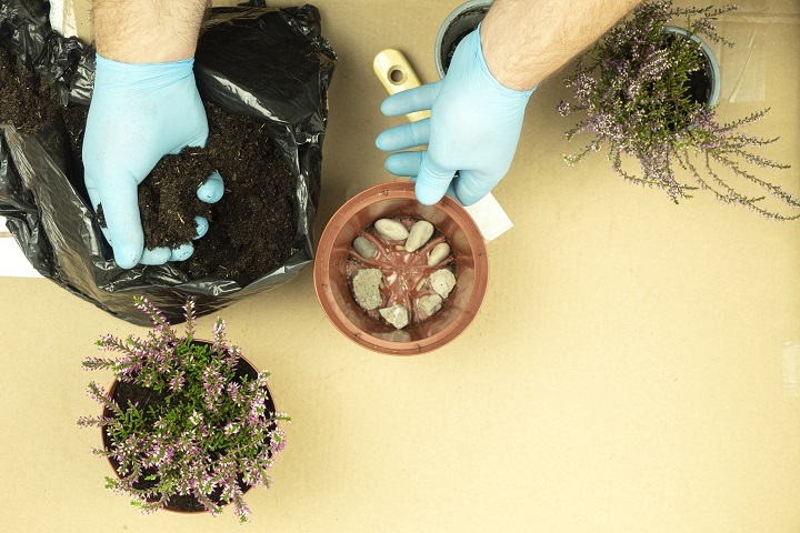 Fertilizing Succulents – How & When To Fertilize Your Plants