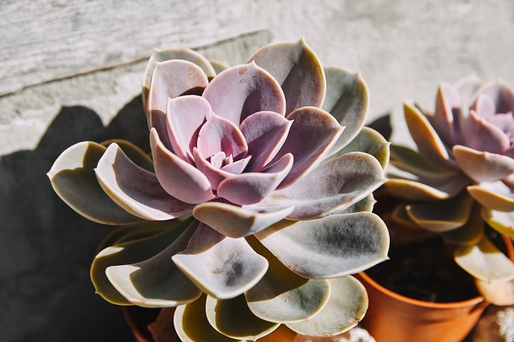 Full Sunlight Succulents That Thrive Even on Direct Sunlight