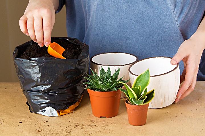 How Does Fertilizing Succulents Work
