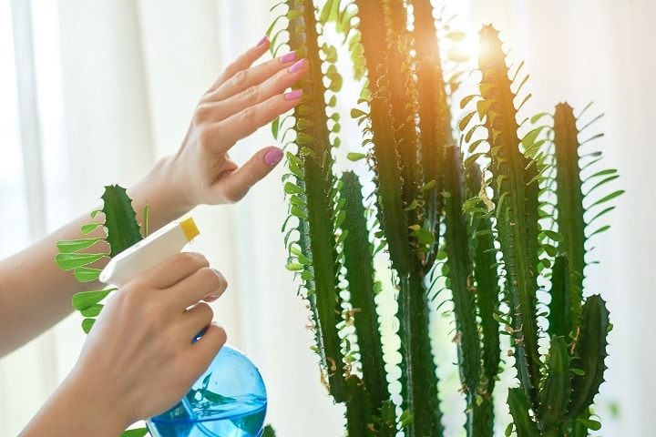 How to Protect Your Succulent During a Heatwave