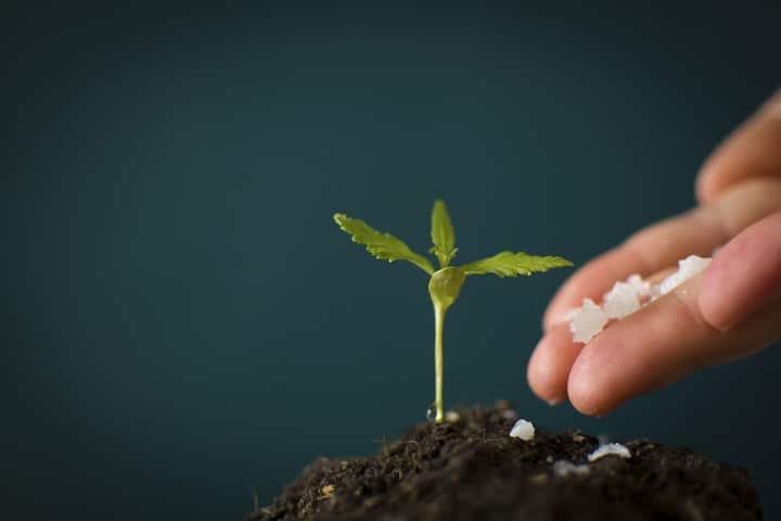 Natural Succulent Fertilizers