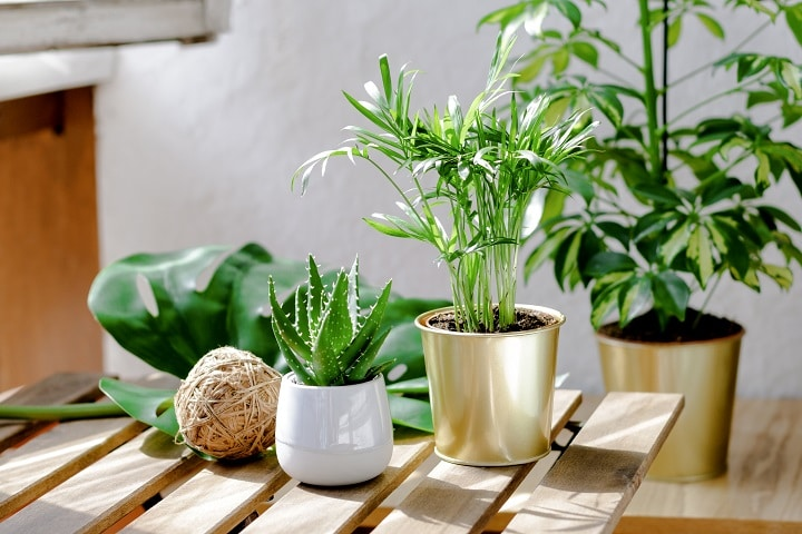 Pros and Cons of Exposing Succulents to the Sun