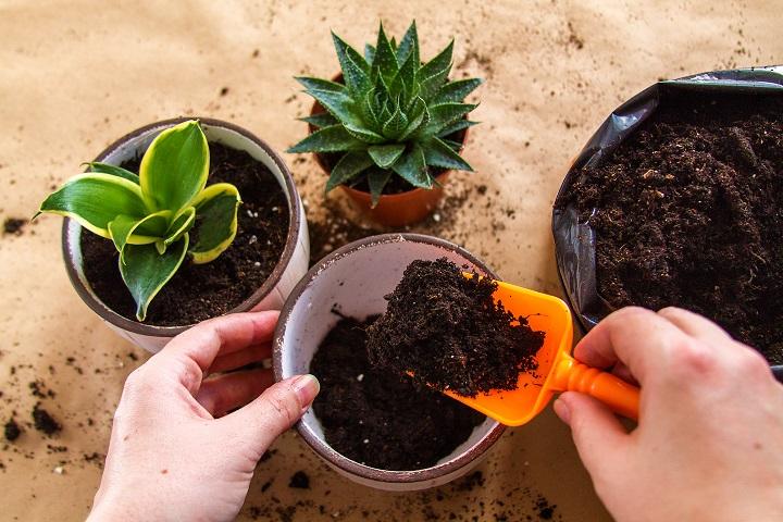 Types of Succulent Fertilizers