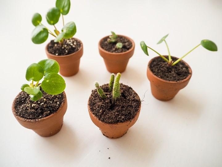 FAQ About Propagating Cacti