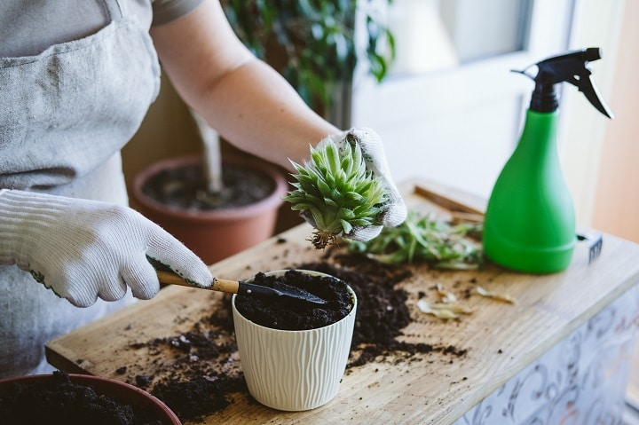 How Does Propagating Cacti Work
