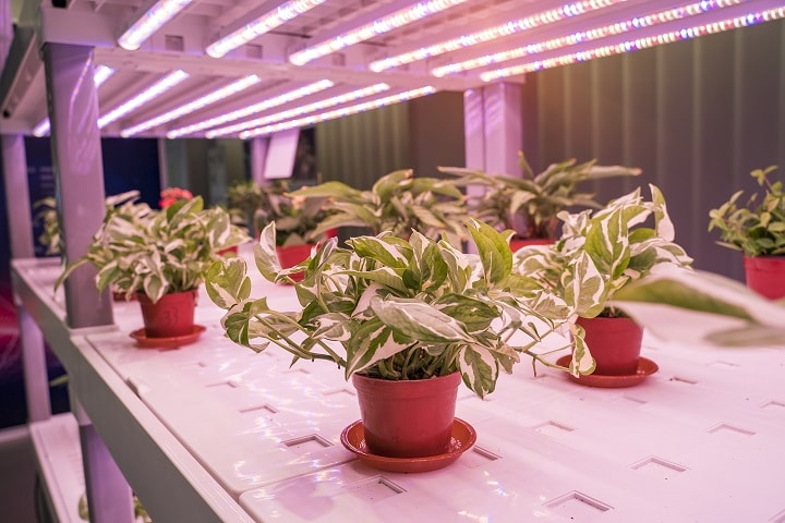 How Does Succulent Grow Light Work