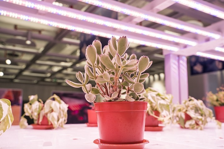 How to Choose the Best Succulent Grow Light - Color Temperature