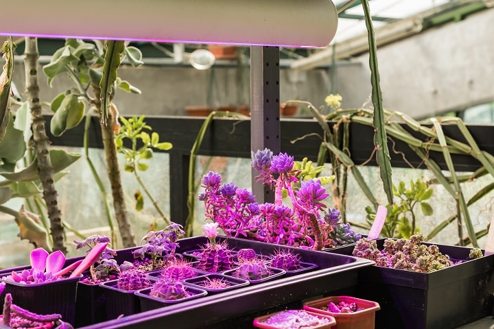 How to Use Succulent Grow Light