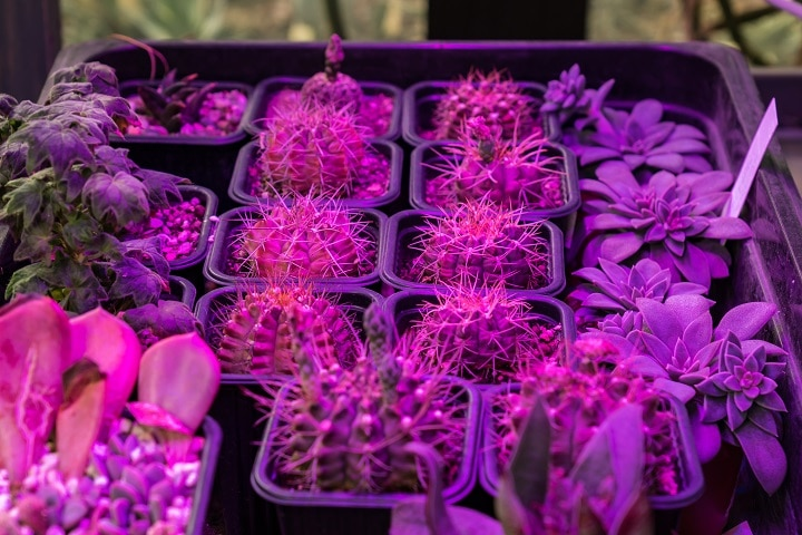Succulent Grow Light to Skyrocket Healthy Succulent Growth