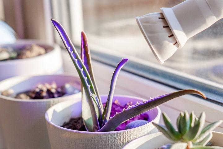 Types Of Succulent Grow Lights - LED Grow Lights