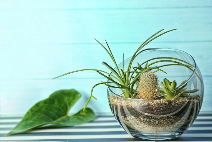 Benefits of Succulent Terrariums