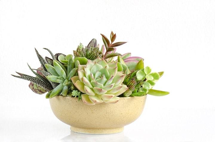 Best Succulent Arrangements