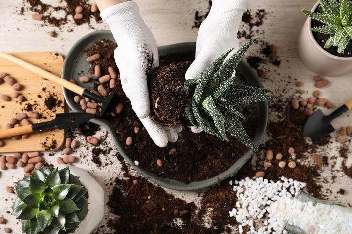 Best Succulent Soil to Maximize Your Succulent's Growth