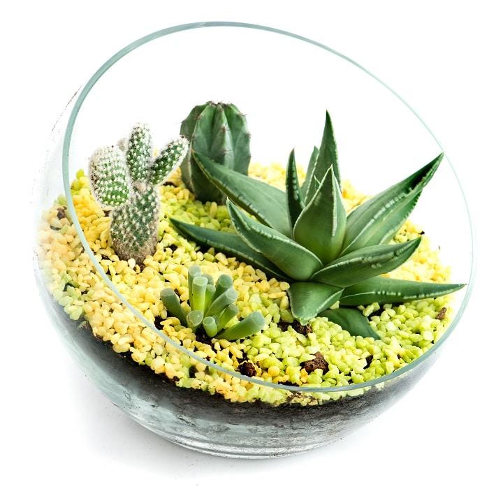 Dish Succulent Terrariums