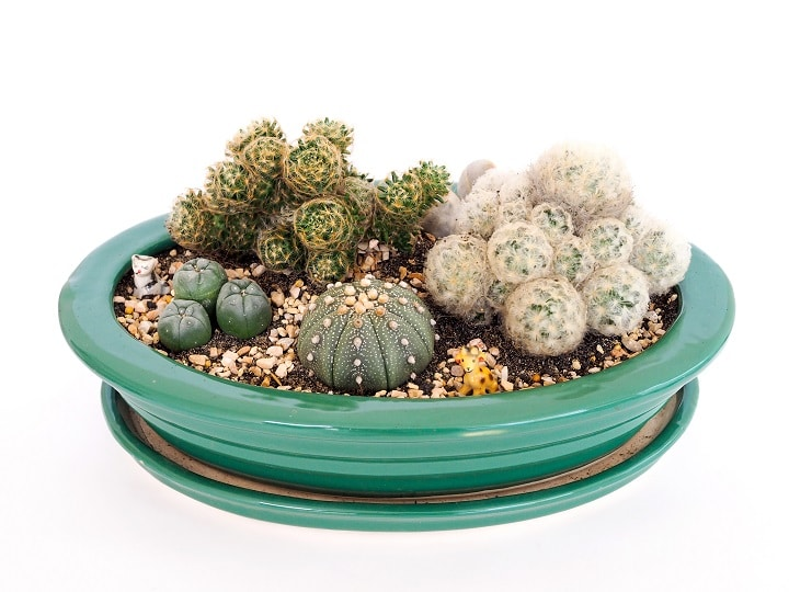 Do's and Don'ts With Succulent Arrangements