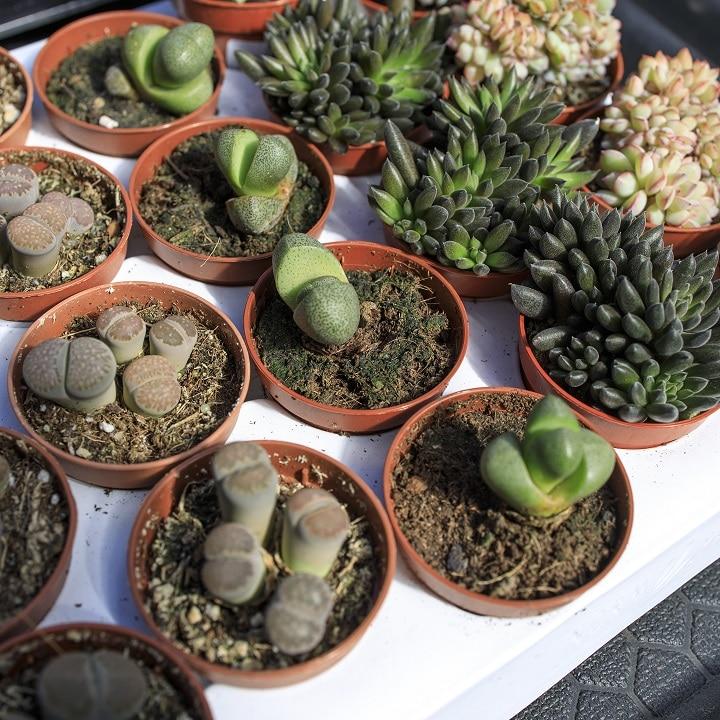 FAQ About Split Rock Succulents