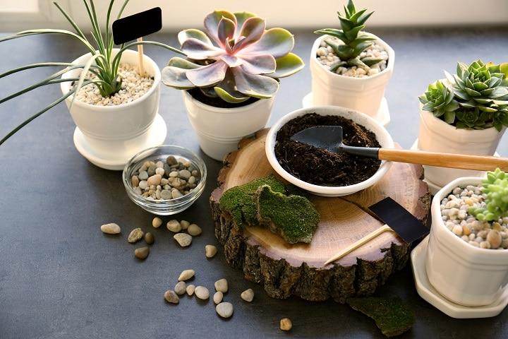 FAQ About Succulent Soil
