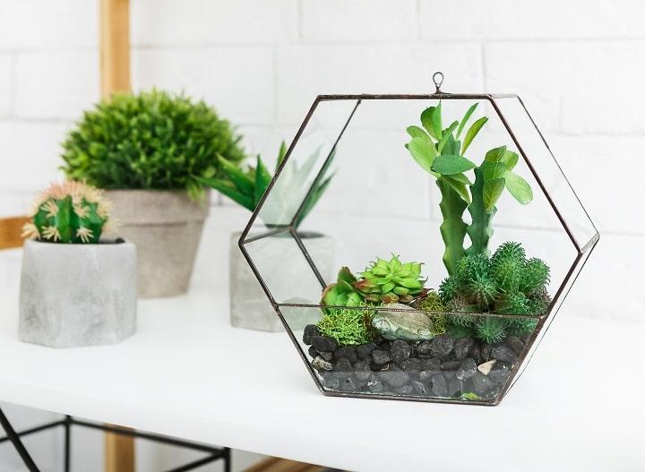 FAQ About Succulent Terrariums