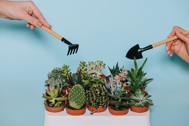 How Do Succulents Work