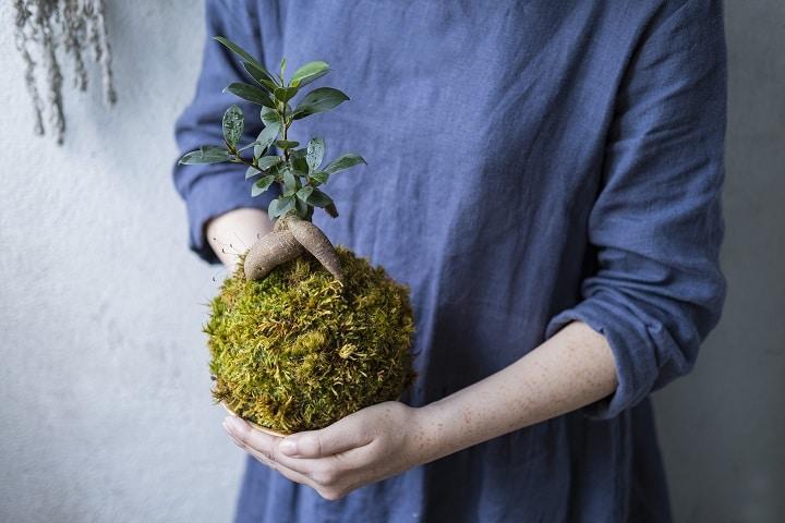 How Does Succulent Bonsai Work