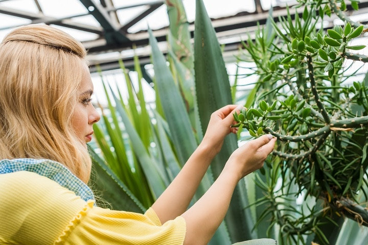 Methods to Prevent a Mealybug Infection