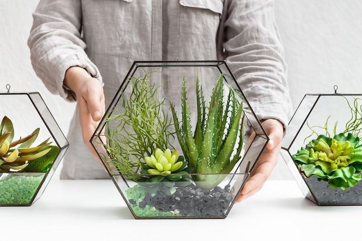 Succulent Terrarium – How to Make It & Show Off Your Plants