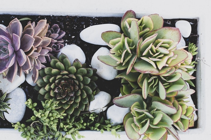 Things to Consider When Making Succulent Arrangements